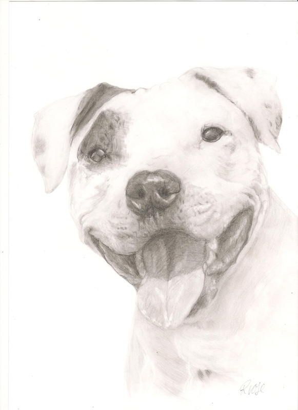 Example of a Pet Portrait by Rebecca Vose