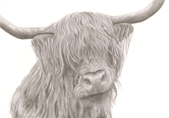 Image of `Highland Cow` Print by Rebecca Vose