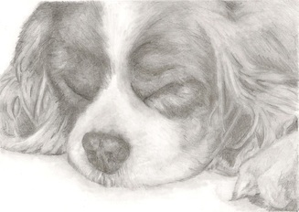 Image of `Sleeping Spaniel`Print by Rebecca Vose