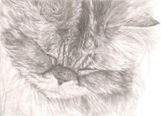 Image of `Purring Cat` Print by Rebecca Vose